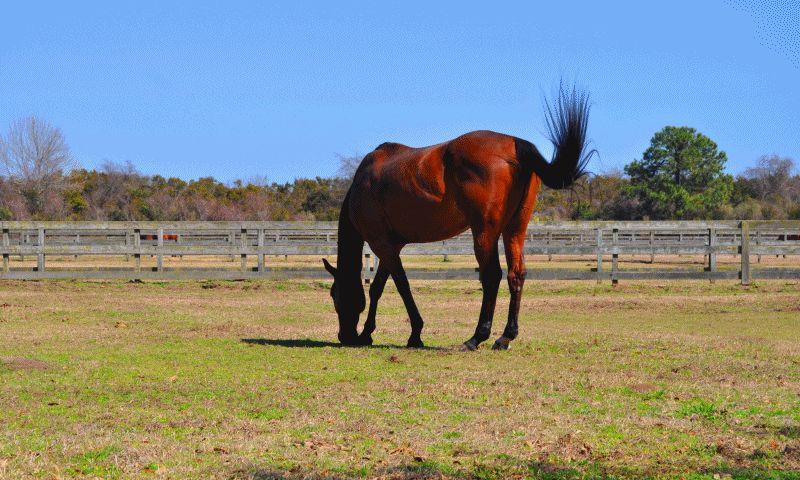 Travel Adventures -- All The Pretty Cavallino -- Seabrook Island, SC Equestrian Center GIF1