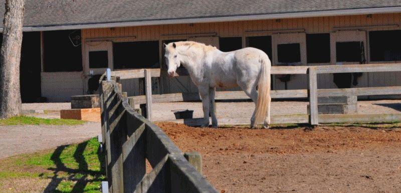 Travel Adventures -- All The Pretty Cavallino -- Seabrook Island, SC Equestrian Center GIF3