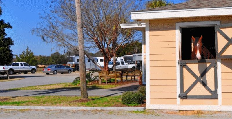 Travel Adventures -- All The Pretty Cavallino -- Seabrook Island, SC Equestrian Center GIF4