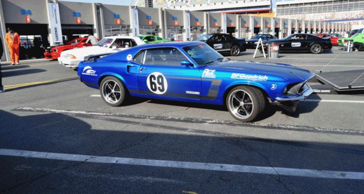 Mustang 50th Anniversary - Stragglers Gallery GIF