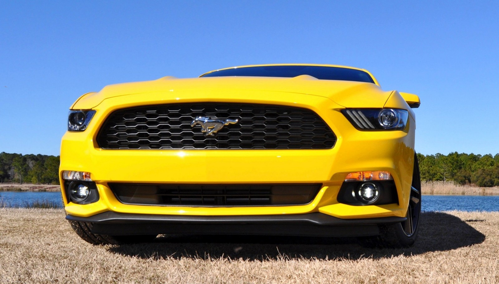 2015 Ford Mustang EcoBoost in Triple Yellow 124