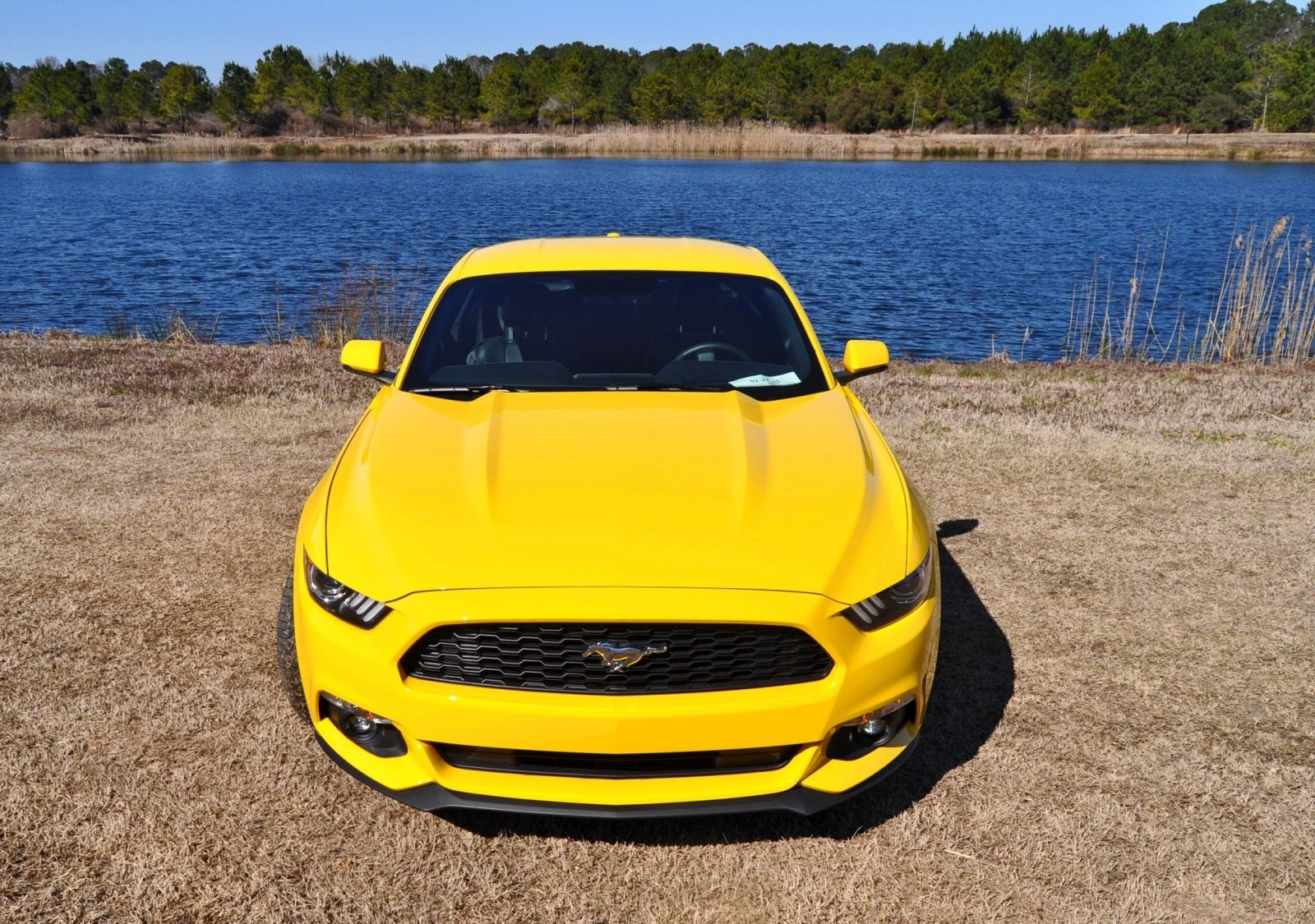 2015 Ford Mustang EcoBoost in Triple Yellow 129