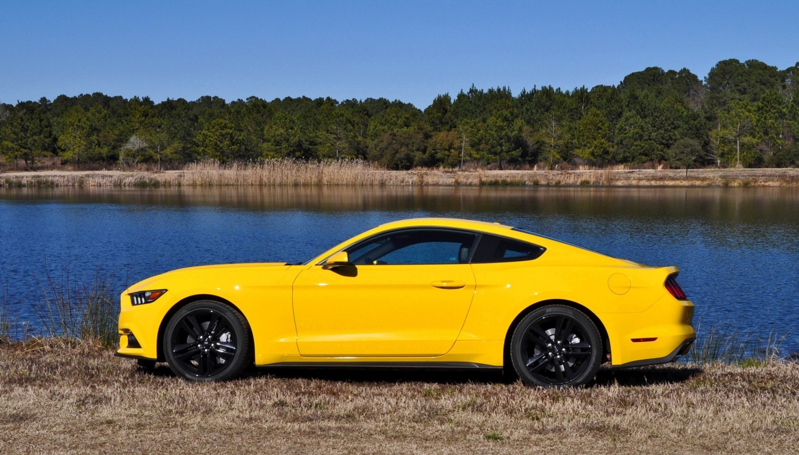 2015 Ford Mustang EcoBoost in Triple Yellow 134