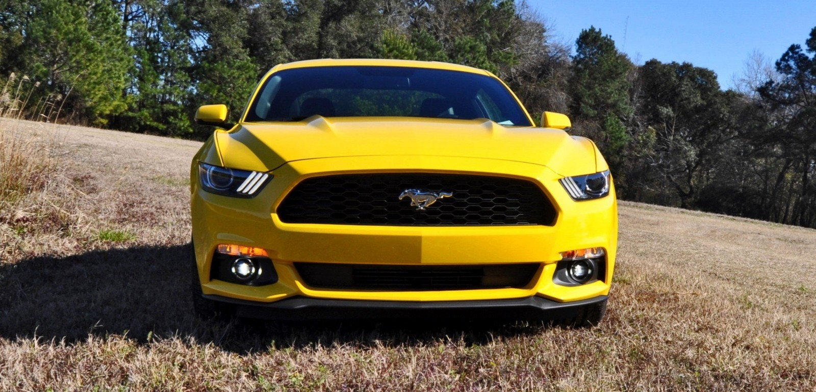 2015 Ford Mustang EcoBoost in Triple Yellow 144