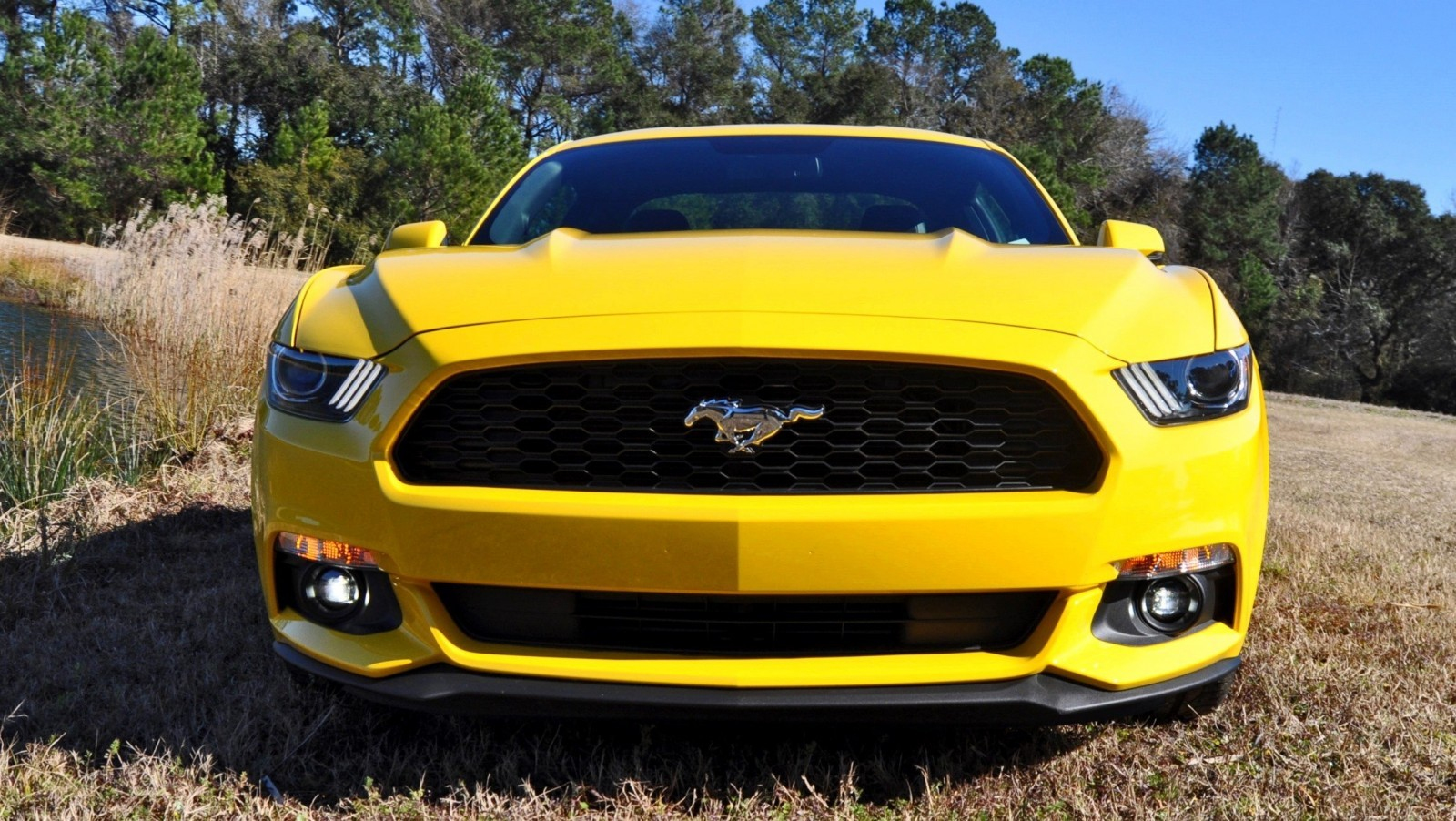 2015 Ford Mustang EcoBoost in Triple Yellow 146