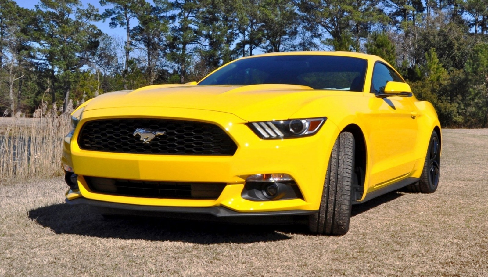 2015 Ford Mustang EcoBoost in Triple Yellow 2