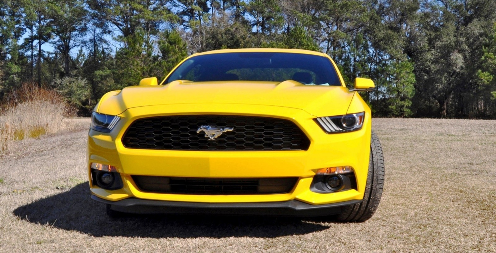 2015 Ford Mustang EcoBoost in Triple Yellow 6