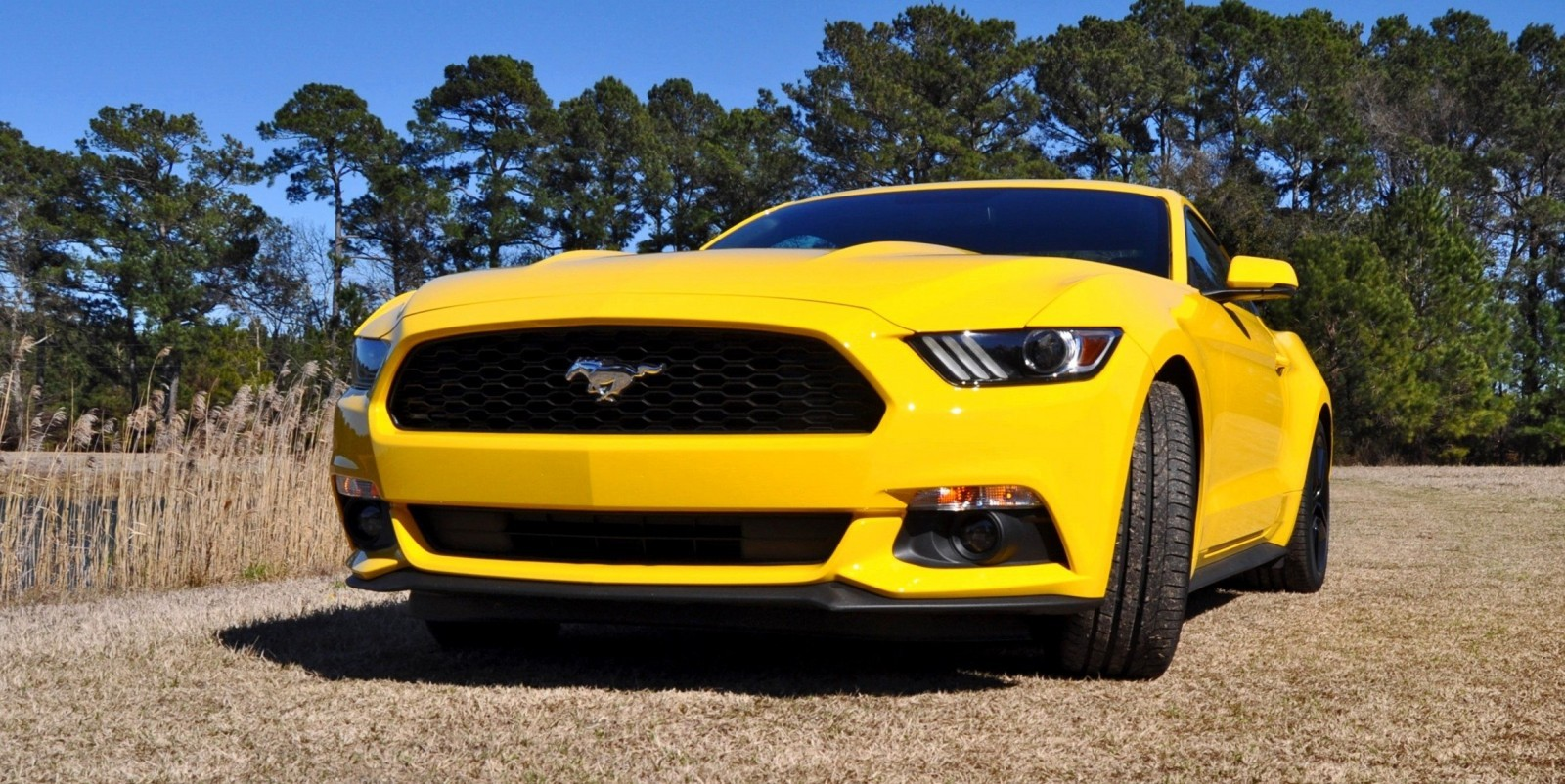 2015 Ford Mustang EcoBoost in Triple Yellow 81