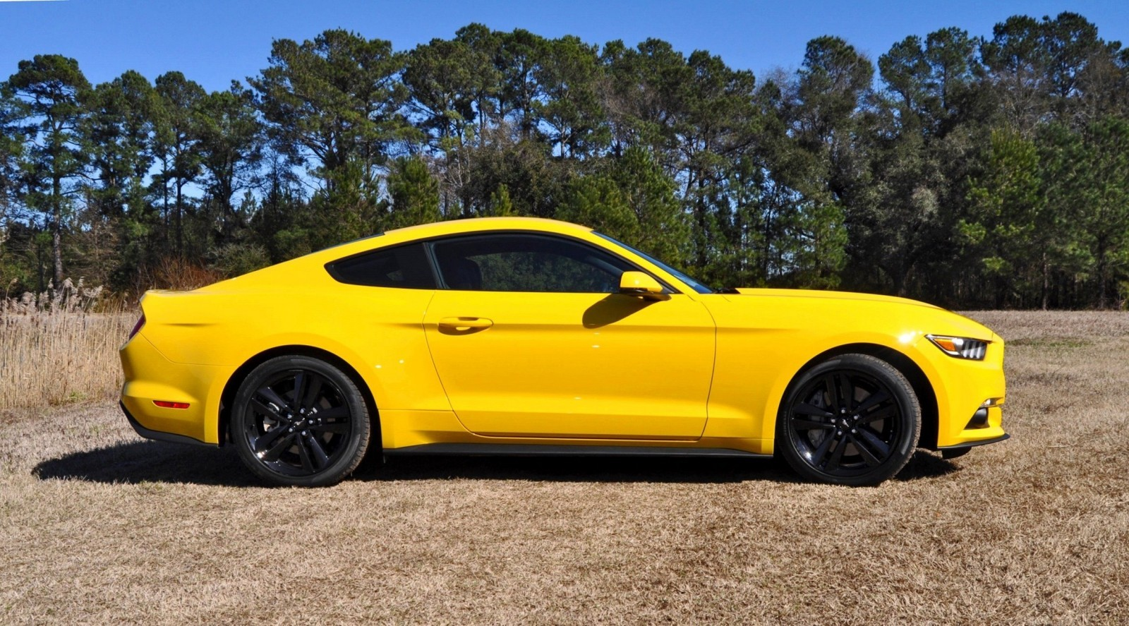 2015 Ford Mustang EcoBoost in Triple Yellow 96