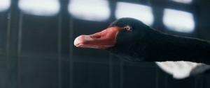 McLaren Black Swan Wind Tunnel 570S 16
