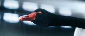 McLaren Black Swan Wind Tunnel 570S 21